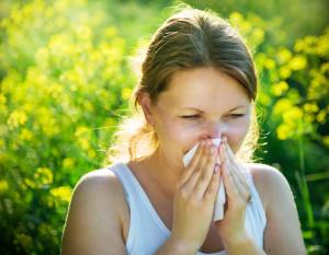 Rhinite allergique saisonnière et réponse immunitaire