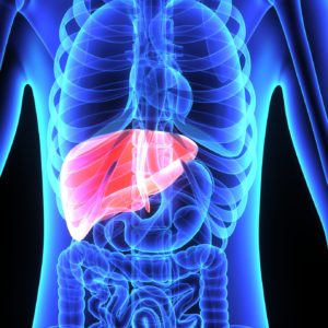 La réponse immunitaire face au virus de l'hépatite B (VHB)