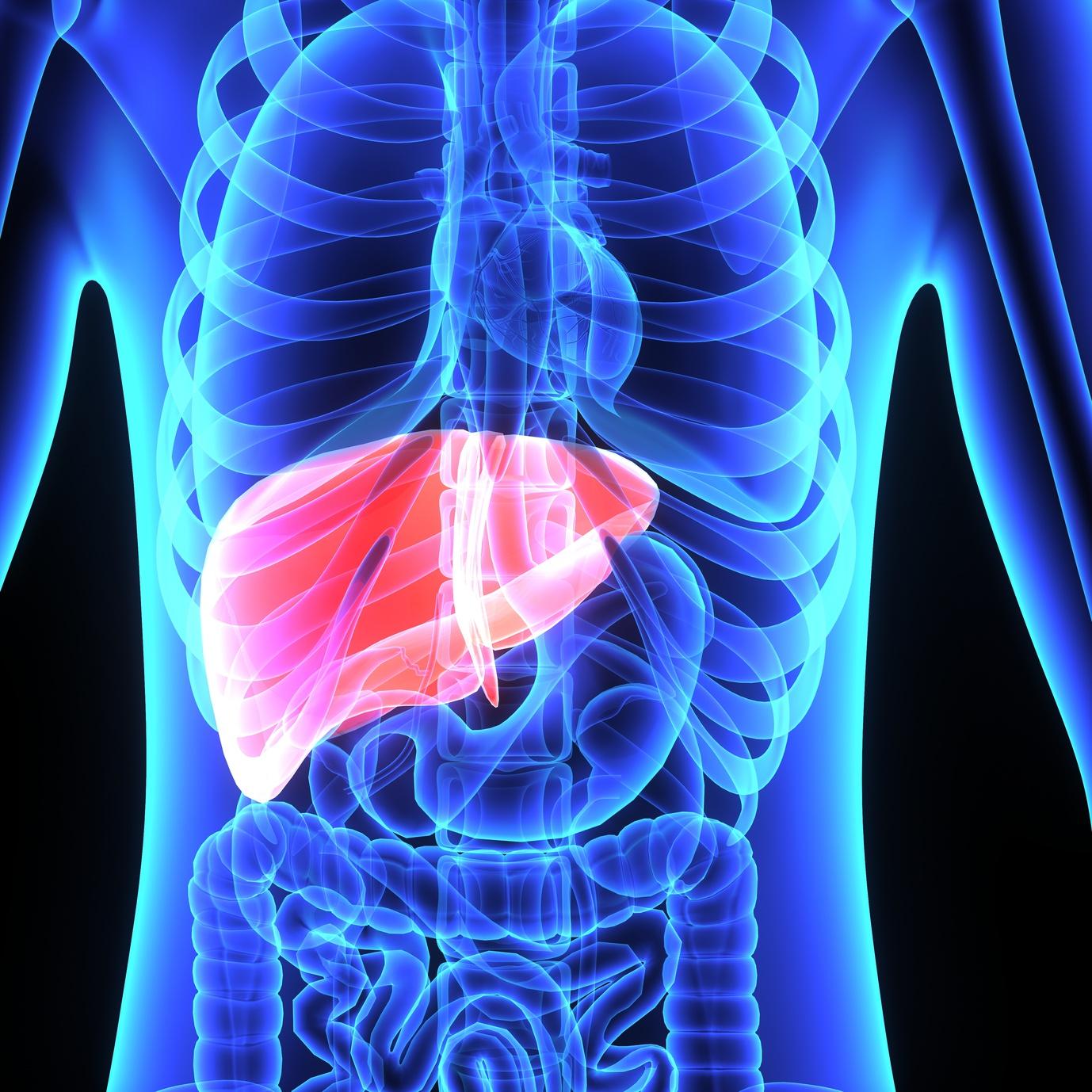 La réponse immunitaire face au virus de l'hépatite B | Notre ...